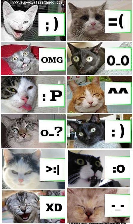 Gatos explicam os emoticons