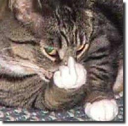 Gato com o dedo pra cima