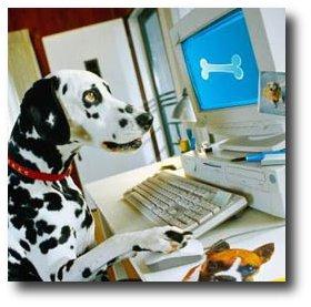 Cachorro usando o computador