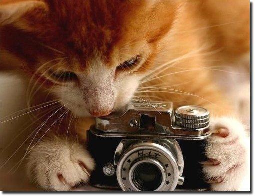 Gatinho com máquina fotográfica