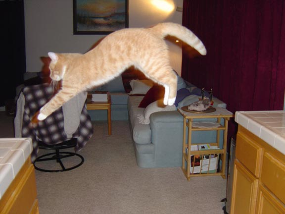Gato voando