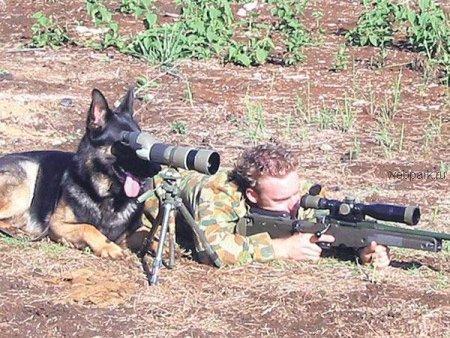 cachorro ajuda soldado