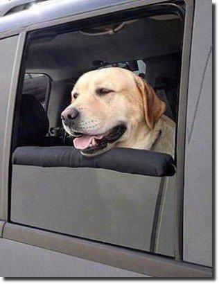 Cachorro na porta do carro
