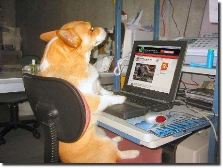 Cachorro no computador visitando o eptm