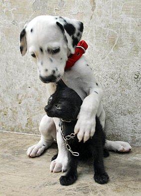 cachorro com gato