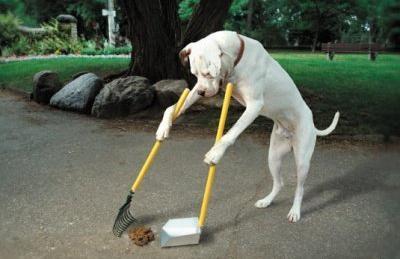 Cachorro limpando a própria merda