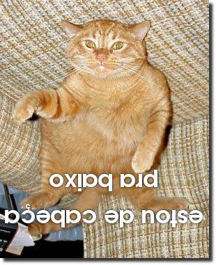 Gato invertido - Estou de cabeça pra baixo