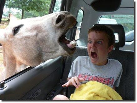 menino cavalo susto horse omg aah