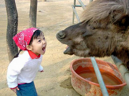 Garotinha gritando com um cavalo