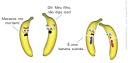 Macacos me mordam. Meu filho não diga isso. É uma banana suicida.