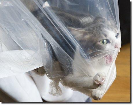 Gatinho gato preso num saco plástico