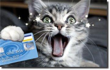Gato dinheiro cartão de crédito