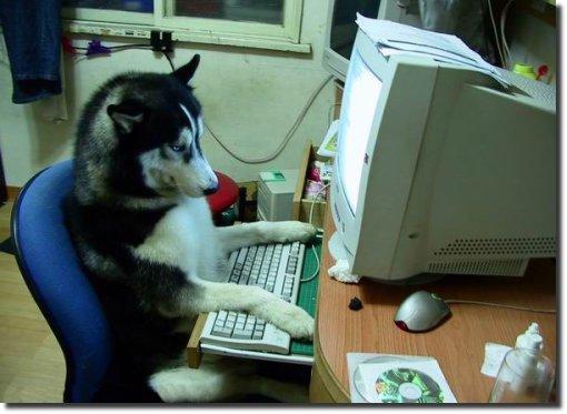 Cachorro visitando o EPTM