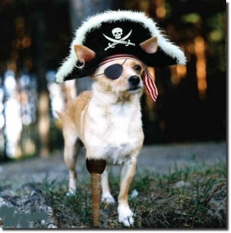 cachorro fantasiado de pirata