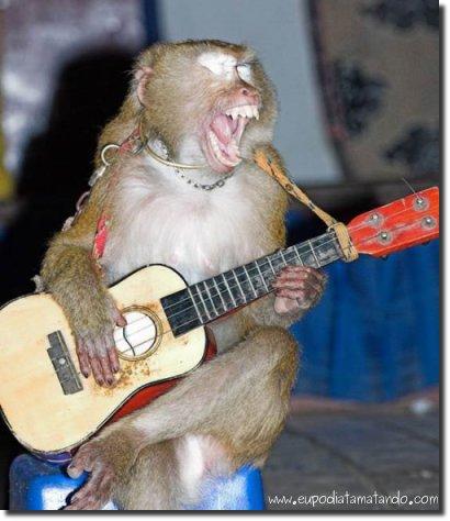 Macaco cantando