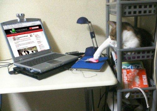 Gato visitando eptm