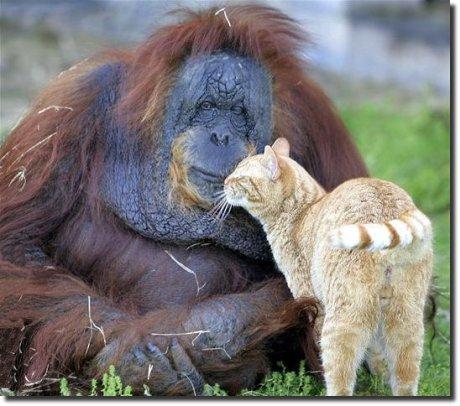 Arão e a gata cristie se beijando