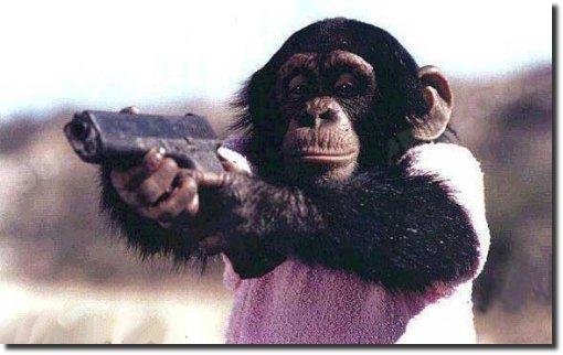 Macaco segurando arma