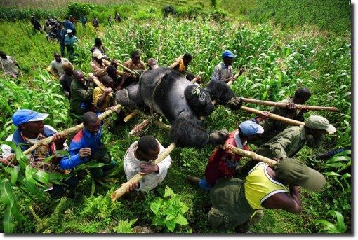 Gorila ou gorilla. Grande blogueiro brasileiro foi encontrado morto
