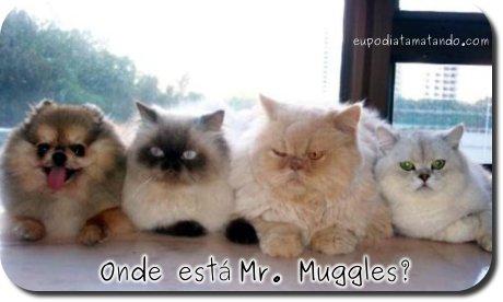 Onde está Mr. Muggles