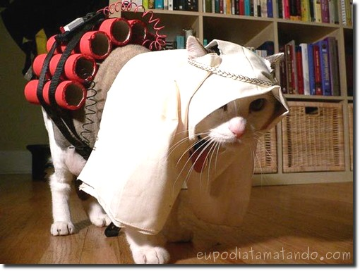 gato bomba
