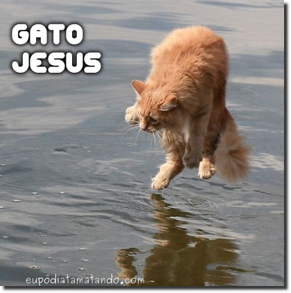 O Gato Jesus