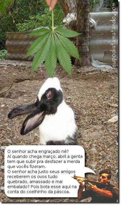 Coelhinho maconheiro