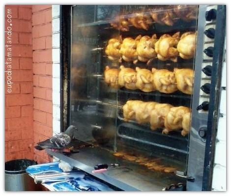 pombo olhando frangos mortos