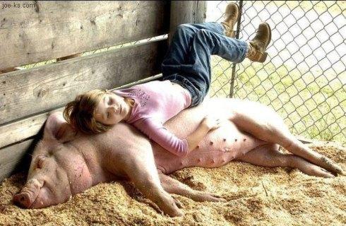 Soneca porca